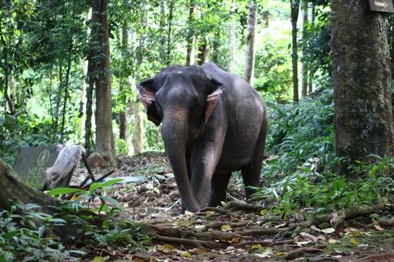 Ban Kwan Chang Elephant