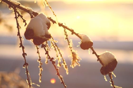 Frostycones